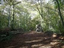 Stroll 118 through the Jussy forest - meet at 12h40 Picture