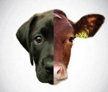 Animal Rights Conference on Speciesism - free