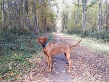 Hiking with Dogs - September Edition - Versoix, GE