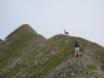 Hike: From Mont Fleuri to Tardevant