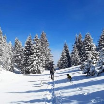 Hiking with Dogs - February Edition - Gimel, Vaud Picture