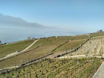 Walk in the sunny Lavaux vineyards