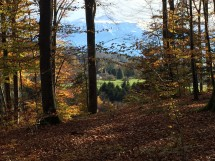 !!**Lausanne Eezy Walkers **!! - a walk in the woods Picture