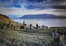 Easy Walk in the Lavaux - Cully to St. Saphorin Picture