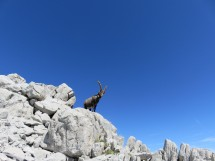 Circular hike to the Pointe du Midi (2364m) Picture